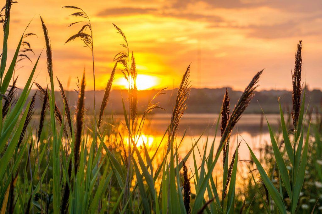sunrise-grass